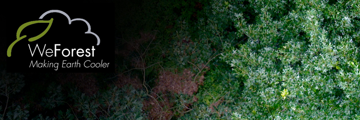 WeForest News image